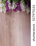 elderberry flower | Shutterstock . vector #527975131