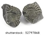 Two Ammonites and their molds and casts - stock photo