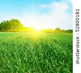 field of grass and sun. | Shutterstock . vector #52800181
