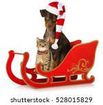 Stock photo christmas pets with sledge 528015829