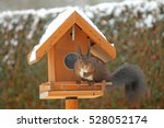 Brown Squirrel Eating At The...