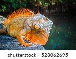 Orange Iguana In Park