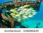Small photo of Yellow snapper (Lutjanus argentiventris), forming a school in a shipwreck, reefs of Sea of Cortez, Pacific ocean. Cabo Pulmo, Baja California Sur, Mexico. The world's aquarium.