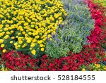 Flowerbed With Red  Blue And...