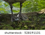 The Feet Of A Canada Goose....