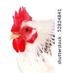 closeup portrait of white hen isolated on white, studio shot - stock photo