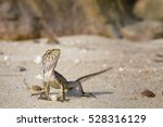 yellow lizard with stripes.... | Shutterstock . vector #528316129