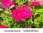 Small photo of Amazing many beautiful pink flower adsorbed sunlight in the garden