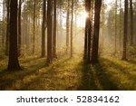 rays of the rising sun pass... | Shutterstock . vector #52834162
