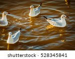 Four Seagulls On The Water