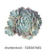 Miniature Succulent Plants...