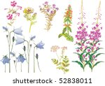 illustration with wild herbs... | Shutterstock .eps vector #52838011