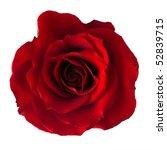 Stock photo isolated dark red rose 52839715