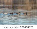 Four Little Ducks Langford...