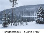 USA, Wyoming, Yellowstone National Park, Snow covered forest beside lake
