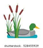 Drake Duck Vector Illustration.