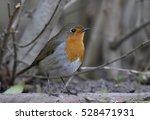 erithacus rubecula robin   Shutterstock . vector #528471931