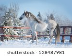 andalusian horse posing in... | Shutterstock . vector #528487981