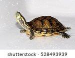 Playful Turtle