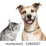 Stock photo staffordshire terrier puppy and gray cat isolated on a white background 52865027