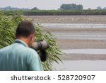 Man watching birds on lake with spotting scope; from behind - stock photo