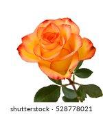 Beautiful Yellow Rose Isolated...