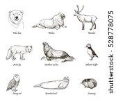 vector set of sketches animals ... | Shutterstock .eps vector #528778075