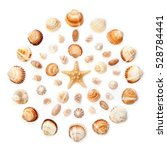 Pattern Of Exotic Seashells An...