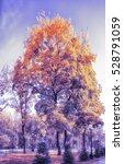 park alley in autumn city park | Shutterstock . vector #528791059