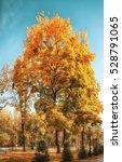 park alley in autumn city park | Shutterstock . vector #528791065