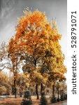 park alley in autumn city park | Shutterstock . vector #528791071