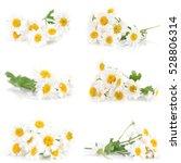 flower camomile | Shutterstock . vector #528806314