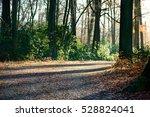 Park Gravel Road With Autumn...