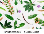 Tropical Exotic Colored Leaf...