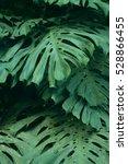 rain forest plants   vegetation ... | Shutterstock . vector #528866455