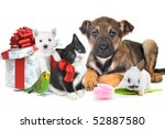Stock photo different pets with gift box and flower together 52887580