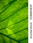 greenery   trend color of the... | Shutterstock . vector #528884839