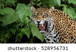 Jaguar In The Amazon Forest