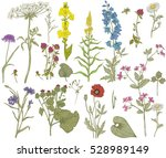 vector wild floral collection | Shutterstock .eps vector #528989149