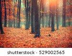 Autumn  Fall Scene. Beautiful...