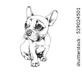 french bulldog puppy. vector... | Shutterstock .eps vector #529024501