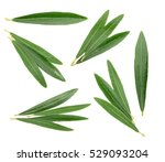 olive leaves isolated on white  ... | Shutterstock . vector #529093204