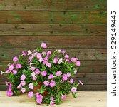 Pink Petunia Flowers In...