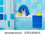 french bulldog dog in a bathtub ... | Shutterstock . vector #529160401