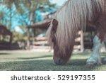 Dwarf Horse At A Farm  Vintage...