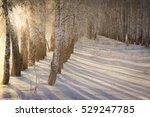 Winter Walk Through The...
