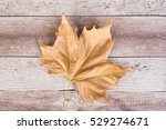 dry maple leaf on a wooden... | Shutterstock . vector #529274671
