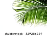 Beautiful Palm Leaves Isolated...
