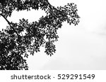 beautiful silhouette leaf tree  ... | Shutterstock . vector #529291549