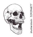 anatomic skull vector art.... | Shutterstock .eps vector #529296877
